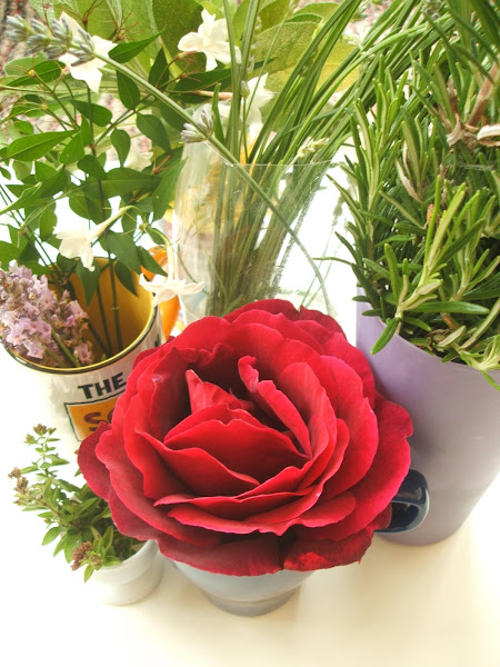 collection of roses, lavender and homegrown herbs used in sensory activity