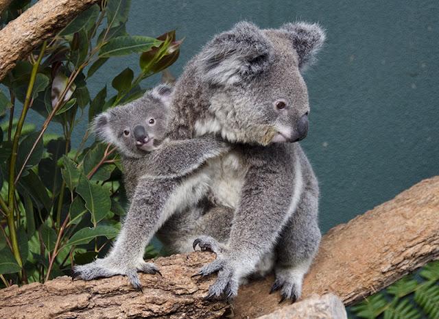 Arribada a Sydney i visita al Wild Life Zoo i al Sea Life Aquarium