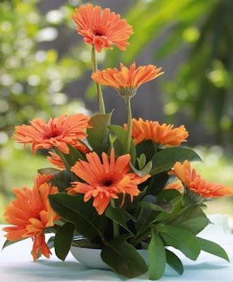Hướng dẫn cách cắm hoa cưới trang trí bàn tiệc