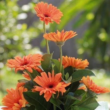 Cách cắm hoa cưới trang trí nhà cửa sang trọng và lịch sự nhất