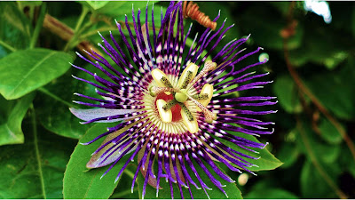 flower-that-contains-brahama-vishnu-mahes-pandav-and-kaurava-paksh