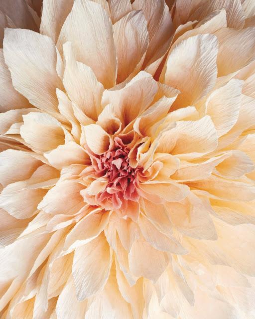 crepe paper flower by Tiffanie Turner