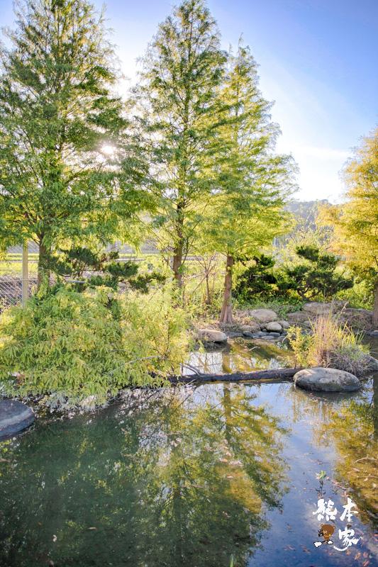 苗栗公館落羽松IG私房景點|和風民宿~秋天才有的絕美景色&民宿環境