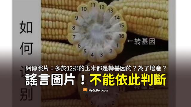 如何識別轉基因玉米 玉米 基改 謠言 12 14 16