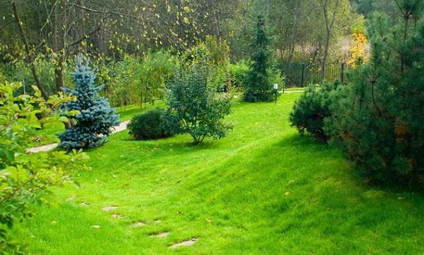 геопластика, газон на рельефе