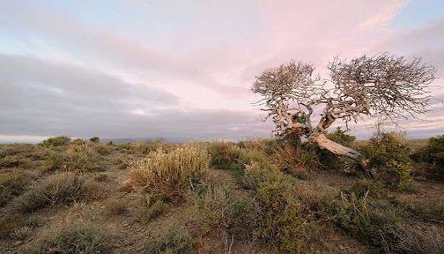 Tankwa National Park