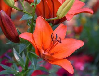 Jenis Tanaman Bunga (florikultura)