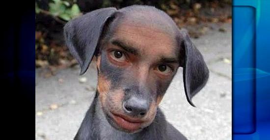 Olfato de cães é igual ao de seres humanos, dizem cientistas - Capa