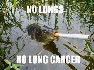 No lungs no lung cancer - funny pics