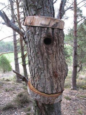 Nido para páridos hecho con un tronco