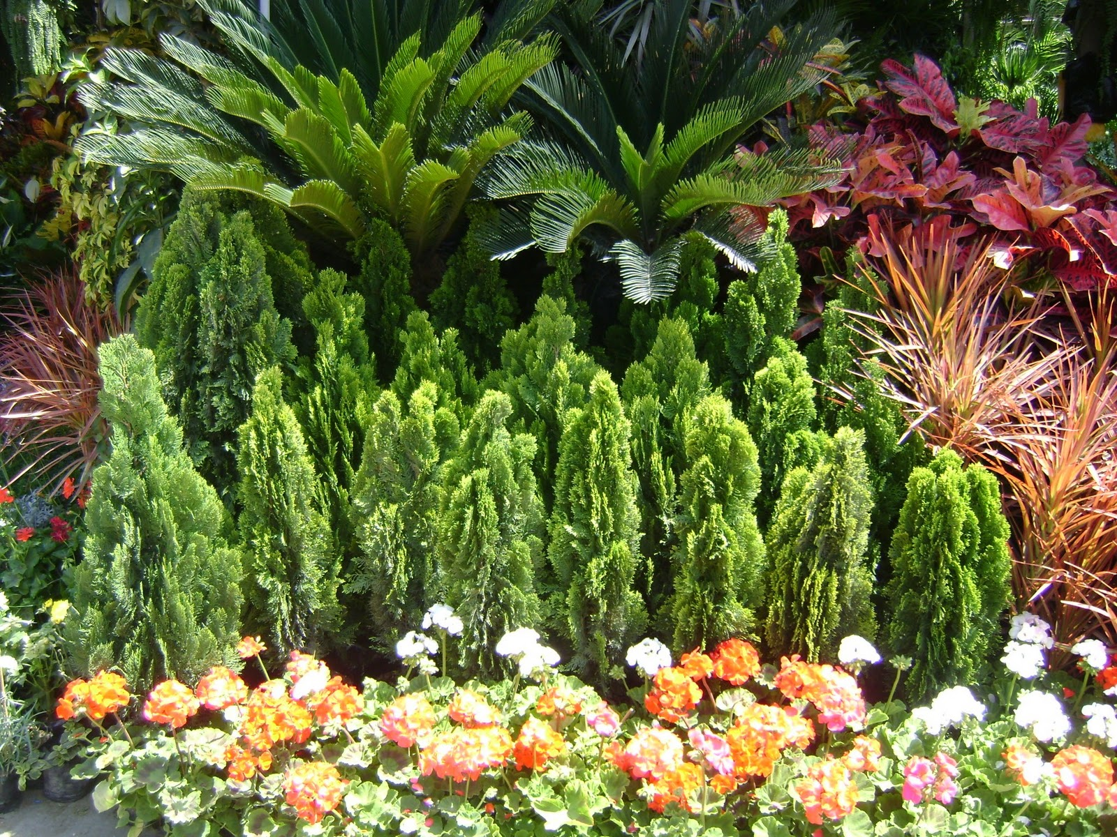 Jardines y macetas fotos de plantas de interior y exterior - Jardin decoracion exterior ...