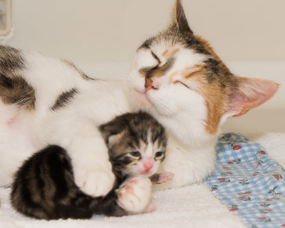 Cats Protection Bridgend Daisy & kitten