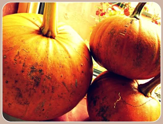 Pumpkins Curing
