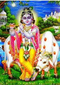 krishna with cow 2 wallpaper
