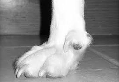 Αποτέλεσμα εικόνας για agrinioike σκύλος