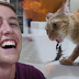 """HE DID IT AGAIN: AMERICAN YOU TUBER """"MY MATE NATE"""" CRITICIZED FOR MAKING CATS FIGHT SCORPION"""