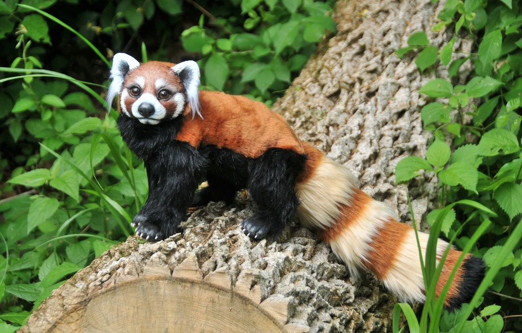 07-Red-Panda-Jesse-Franks-Realistic-Faux-Animal-Sculptures-www-designstack-co