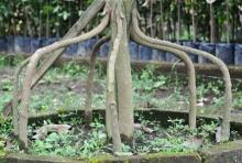 www.dwisangpetani.blogspot.com