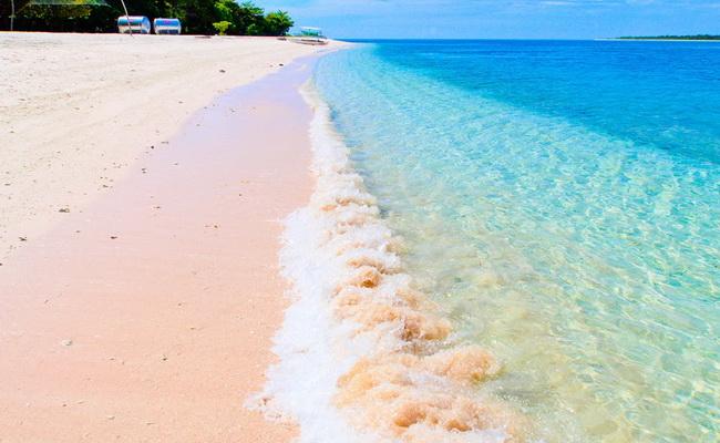 Xvlor Great Santa Cruz Island is pink beach of Tubipora musica