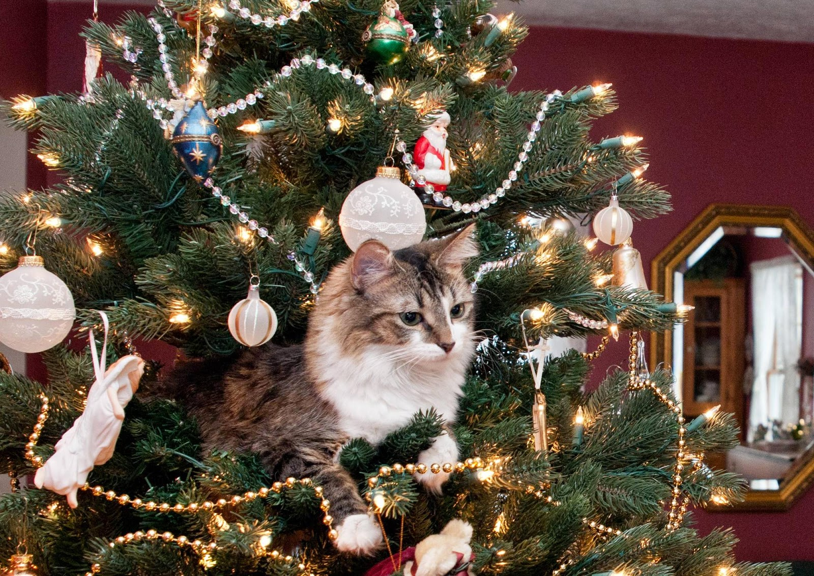 21Times Animals Behaved Like aGrinch When They Saw aChristmas Tree