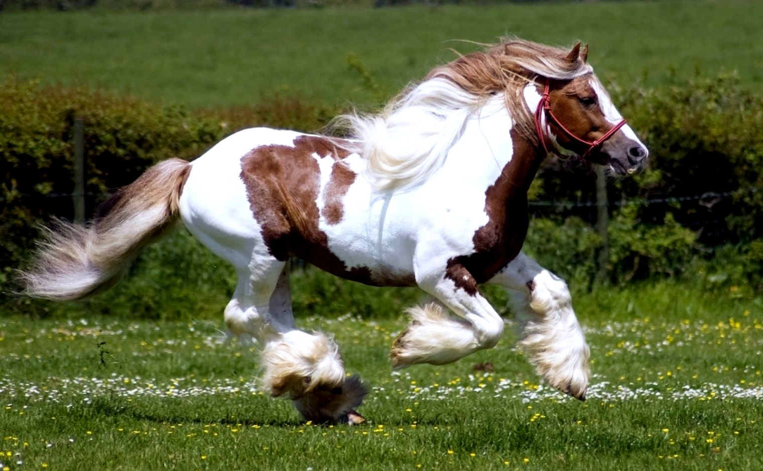 Horses Hd Wallpapers Elegant Wallpapers