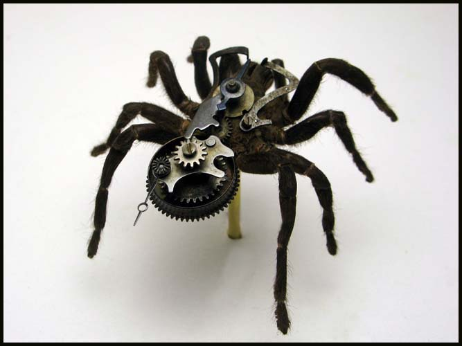 Steampunk Insects  Spicytec