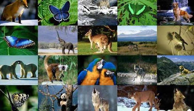 kumpulan fakta unik dan aneh tentang binatang