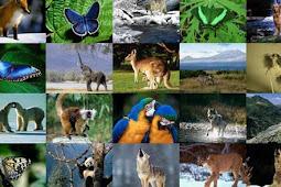 Kumpulan 100 Fakta Unik dan Aneh Tentang Binatang