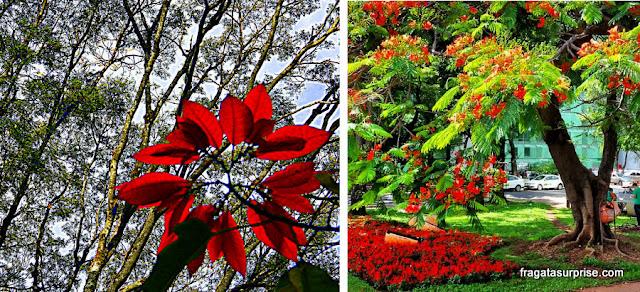 Floradas em Brasília