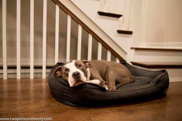 Two Pitties in the City: DoggyStyle: P L A Y Dog Bed (The