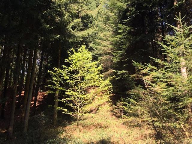 Wald mit Laubbaum und neuen Blättern