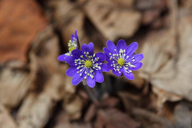 hoa dại đẹp nhất 1
