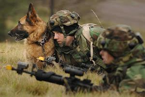 Mascotas Militares