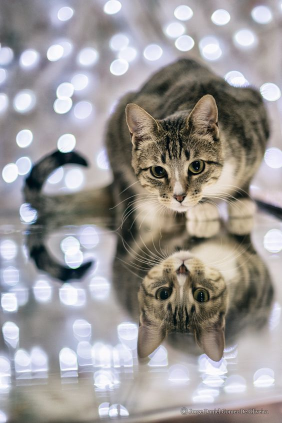 Magical Meow Reflection