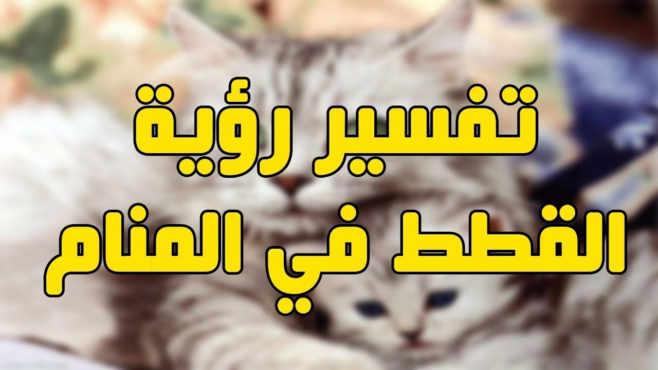 تفسير الاحلام قطط لابن سيرين المسلمون