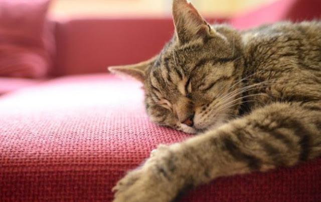Kenali Kucing yang Kamu Pelihara