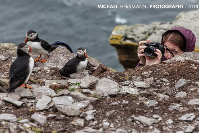 skellig michael, puffin, photography course