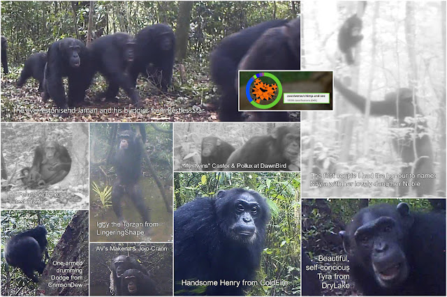 Images from ChimpandSee.org