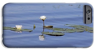 Buy iPhone case of Water Lillies