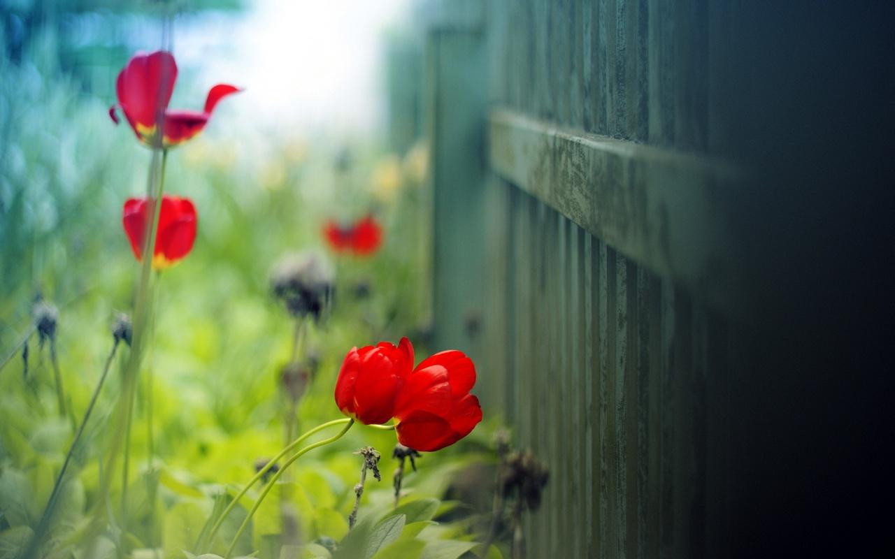 Les Plus Beau Fond Ecran Fleurs Fond Ecran Pc
