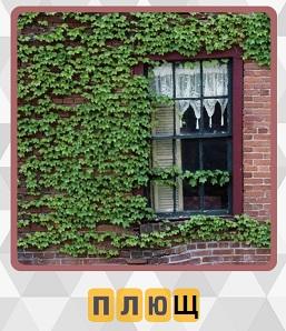 вьется плющ на доме вокруг окна 5 уровень игры 600 слов