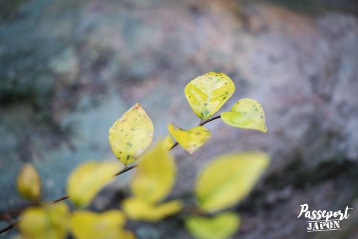 Détail de végétation, Bôzu Jigoku, Beppu, Oita