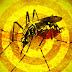 ALERTA: Sobe para 89 o número de mortes devido a febre amarela no Brasil