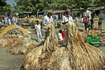 Mozahedul Islam S Blog Jute The Golden Fiber Of Bangladesh