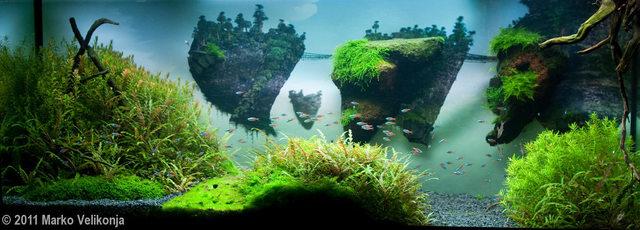Bể thủy sinh phong cách Avatar - vô cùng lạ mắt