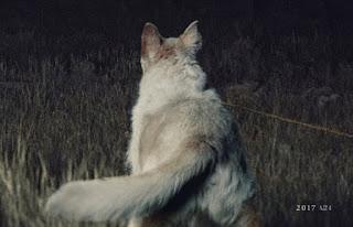 it comes at night: nuevas imagenes y detalles de la película