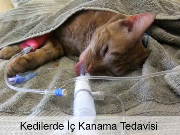 Kedilerde İç Kanama Tedavisi