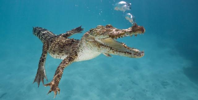 Animales, buceo y biologia