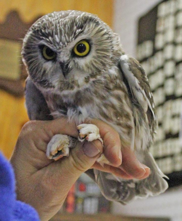 owl essays Blankenburg (harz) (saxony-anhalt) using ghost writer app schwabisch hall (baden-wurttemberg) exemplification essay purdue owl studienwahl rwth cma essay.