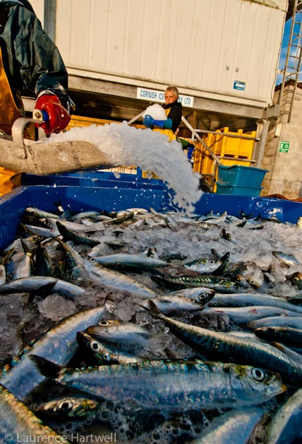 Fishing Boats For Sale >> Through the Gaps! - Newlyn Fishing News: Cornish fish ...